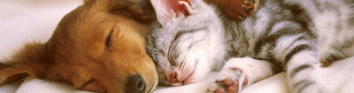 veterinaryMedicineHeader